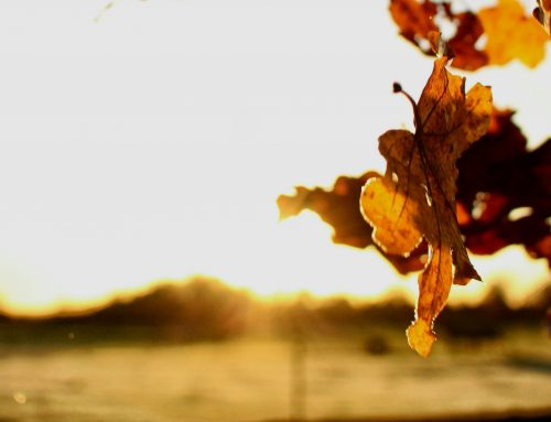 Herbstzeiten